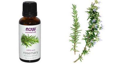 Photo of How to Use Rosemary Oil for Hair Growth, Benefits, Reviews and Pictures