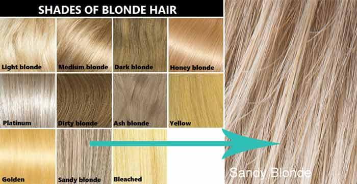 Sandy Blonde chart
