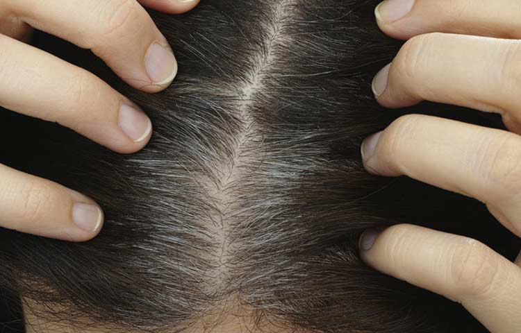 Grey Hair root touch up